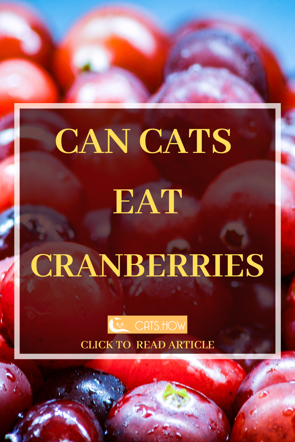 ᐉ Can Cats Eat Cranberries What is healthy food, Eat