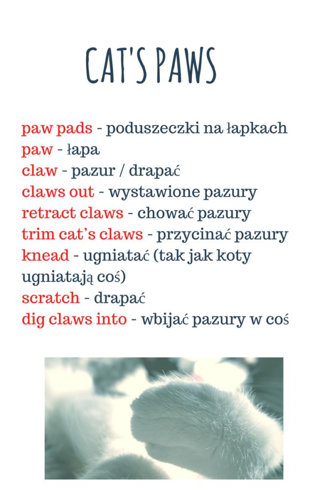 Naukaangielskiego Słownictwo Poangielsku Blogangielski