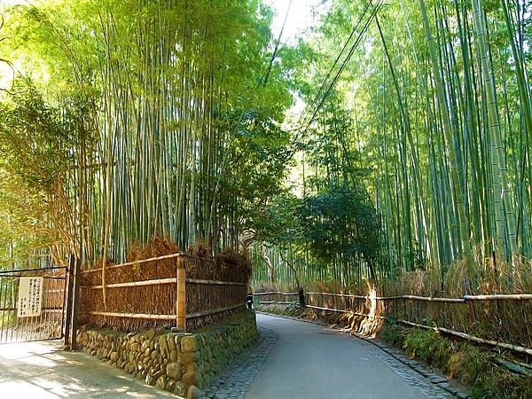 Pin By Irene Chee On Bamboo Bamboo Travel Themes Paths