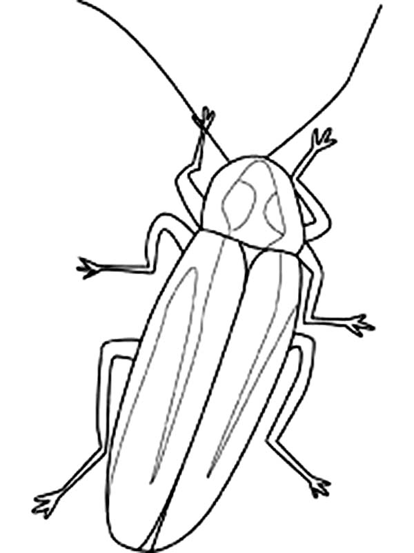 Firefly Image Coloring Page Color Luna Firefly Images Coloring Pages Bug Coloring Pages