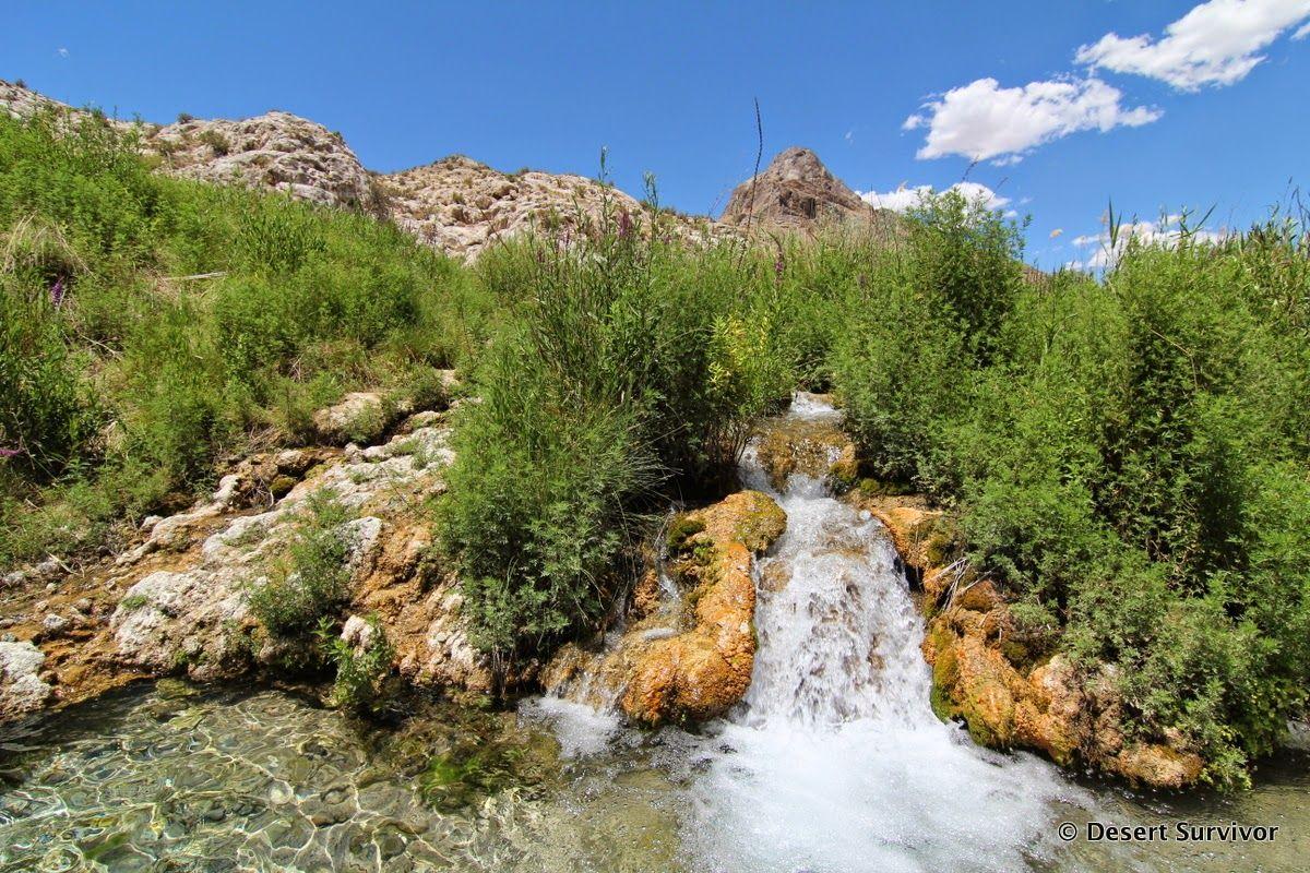 Desert Survivor: Gandy Warm Springs, Millard County, Utah