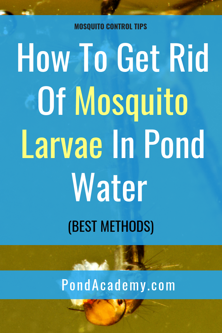 d2b7f9e6ea758828acee0b020f2e9771 - How To Get Rid Of Mosquito Larvae In Water Feature