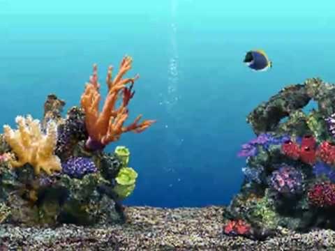 Pin De Rebecca Campbell En Coral Reef Colors And Textures Fondo De Pecera Salvapantallas En Movimiento Fondo De Pantalla De Niños