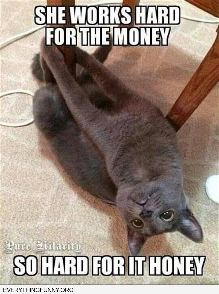 funny cat picture on pole she works hard for the money ...