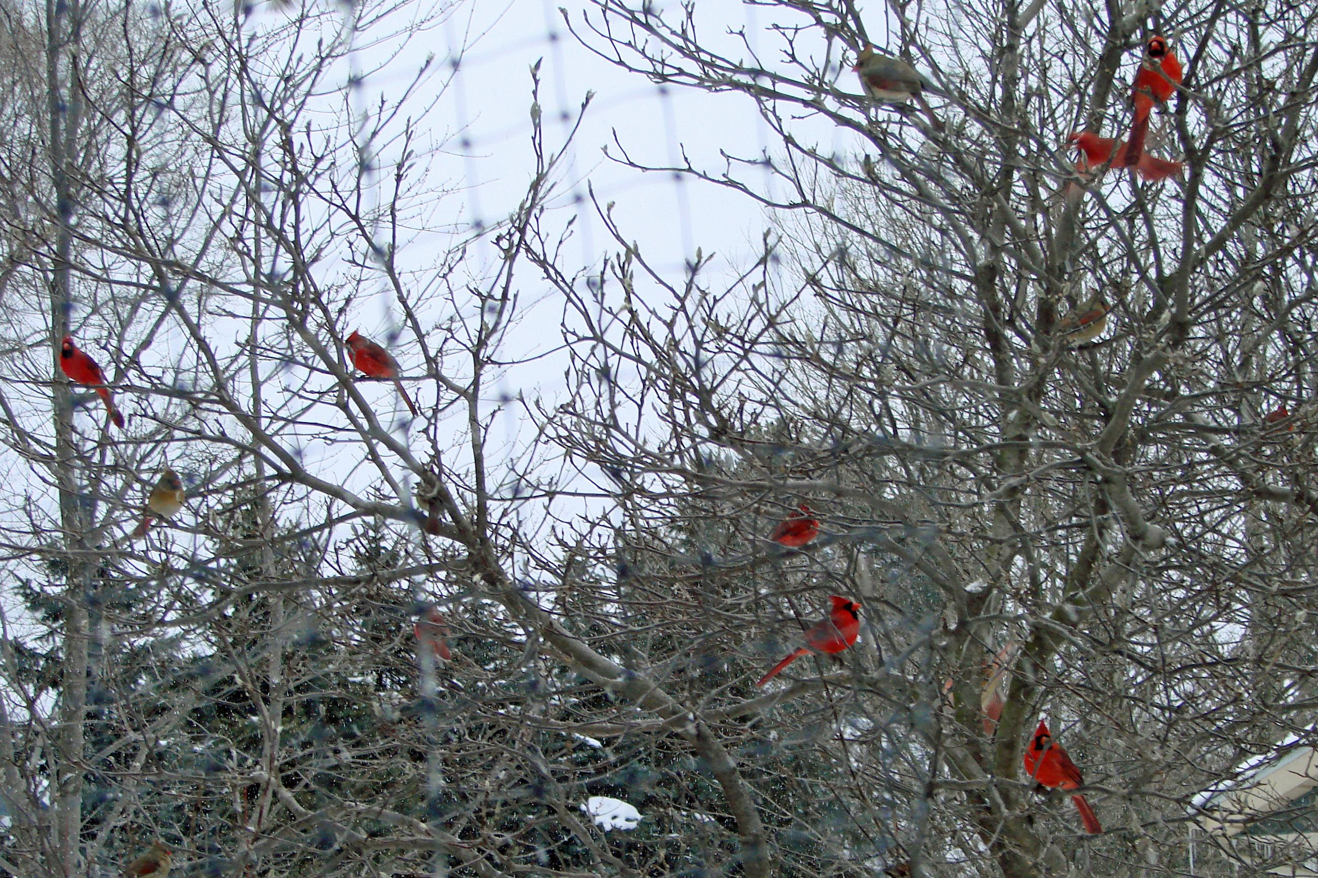 Outdoor ornaments.