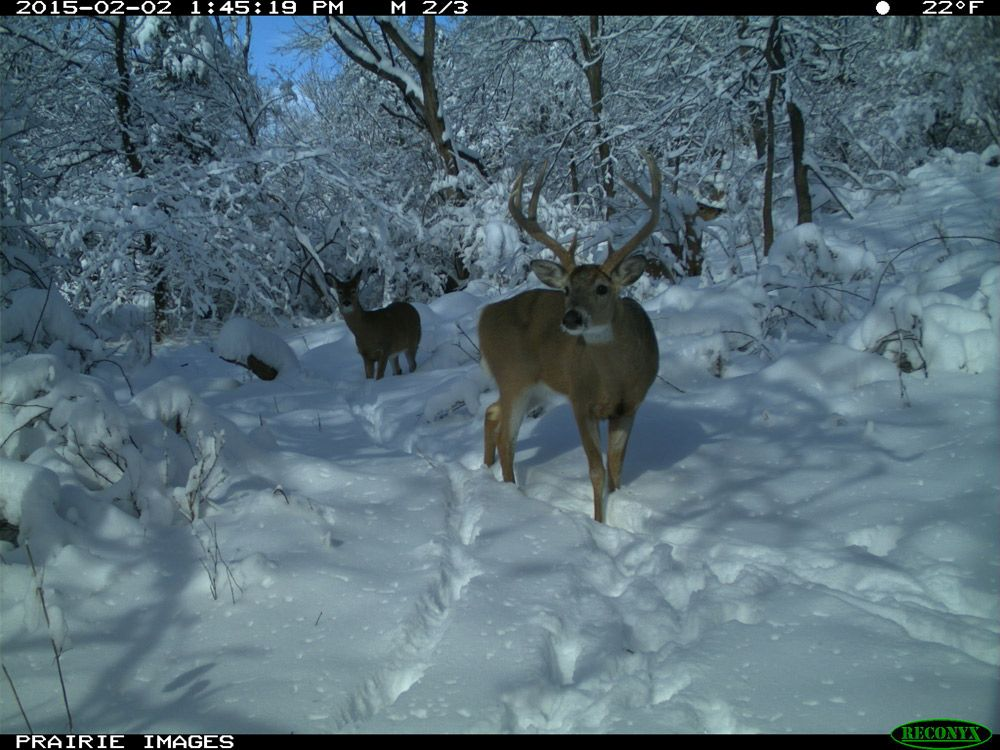 Deer pictures trailcampros 2015 photo contest reconyx