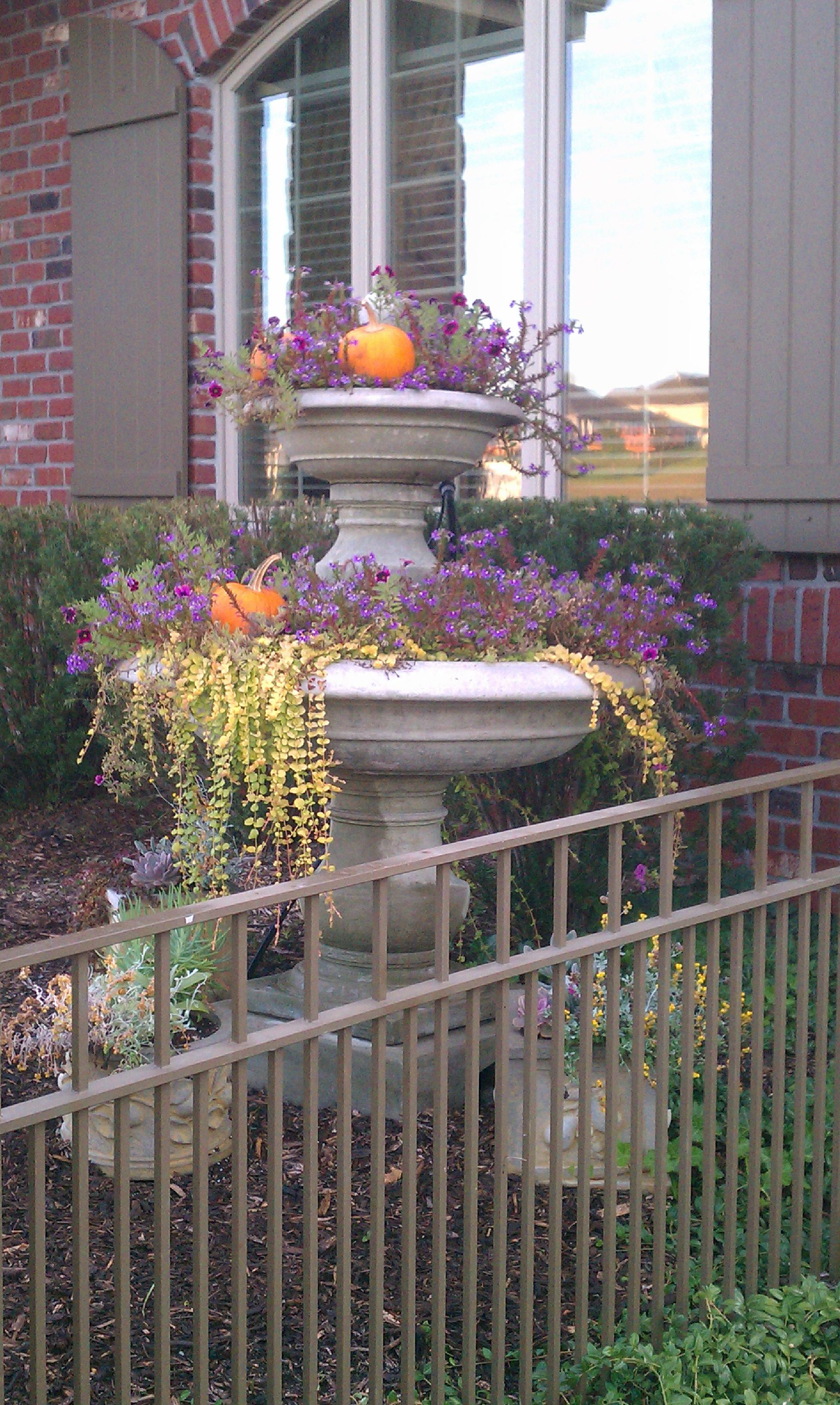 MAKE A SPLASH IN THE BACK YARD | Container water gardens ...