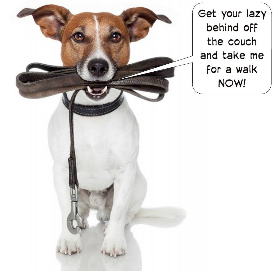 Take Me For A Walk Leather Leash Pet Sitters Dogs