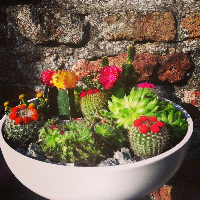 Cactus Garden Love The Vibrant Colors 400 x 300