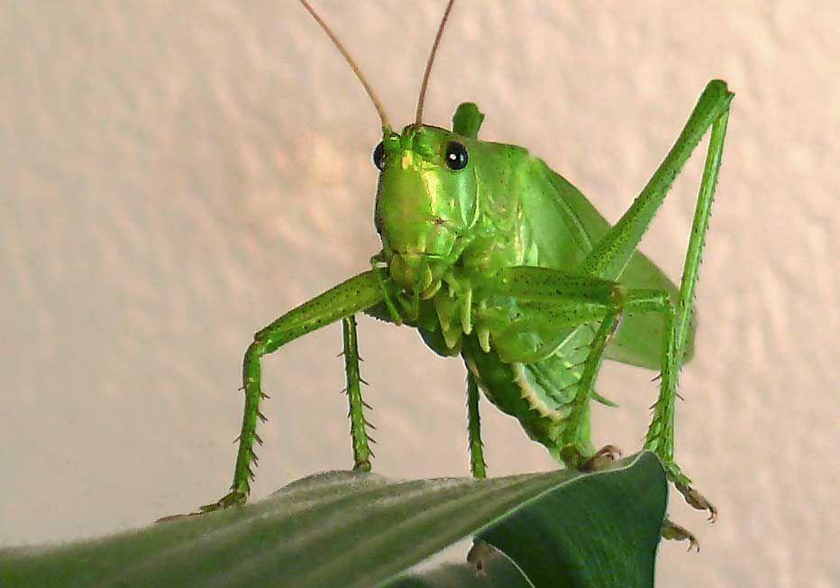 Green Kedar Photography Green Animals Photography Tags Green Nature