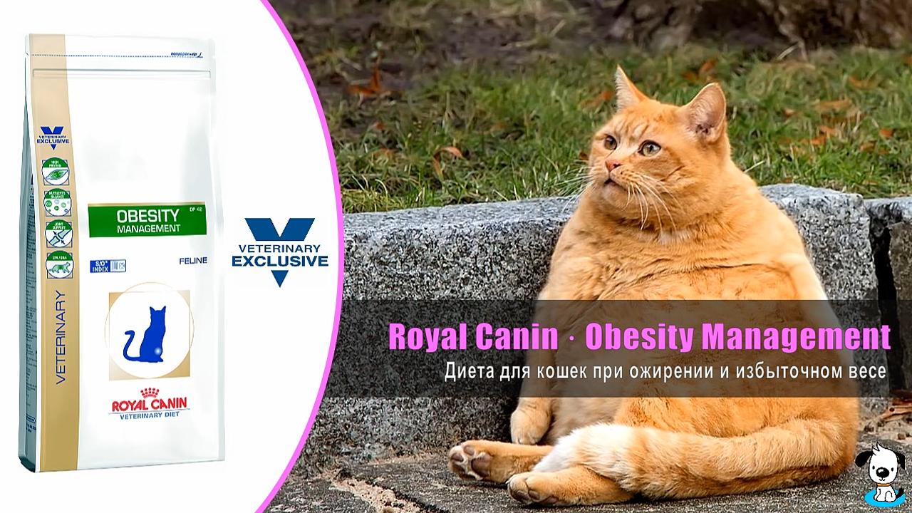 Система Кот Для Похудения. 5 способов посадить кошку на диету