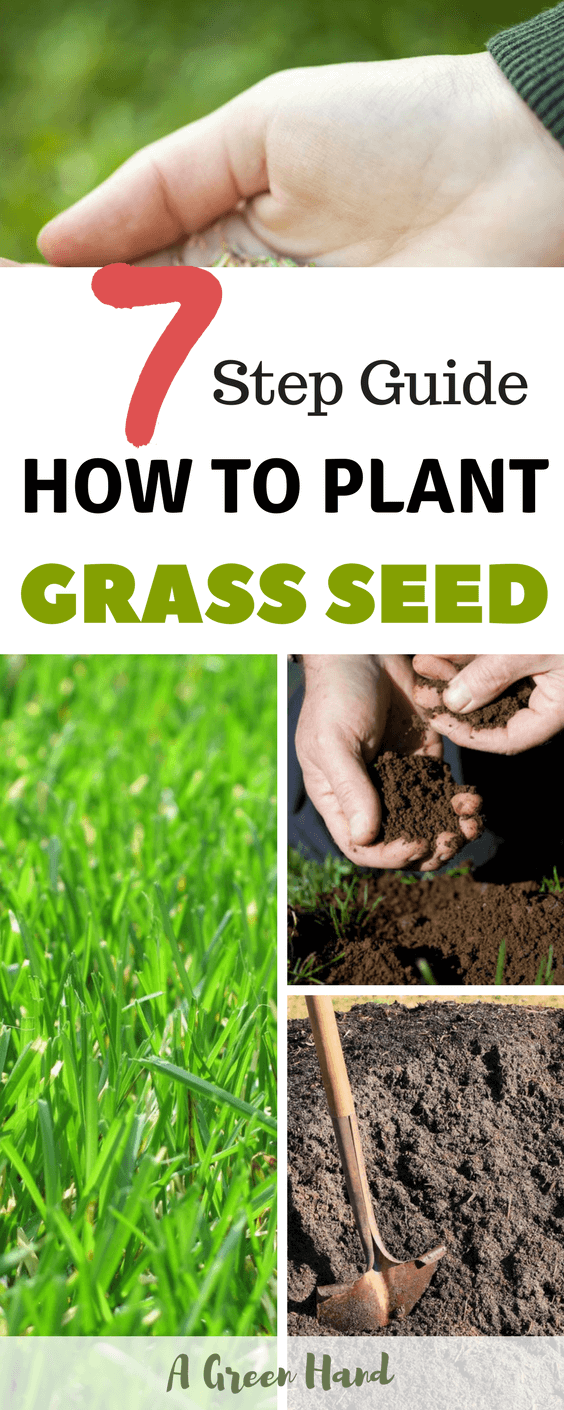 How To Plant Grass Seed A 7 Step Guide Planting Grass Grass Seed Planting Grass Seed