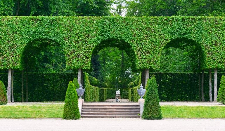 Magnificent Garden Hedge Designs Images   Landscaping Ideas For .