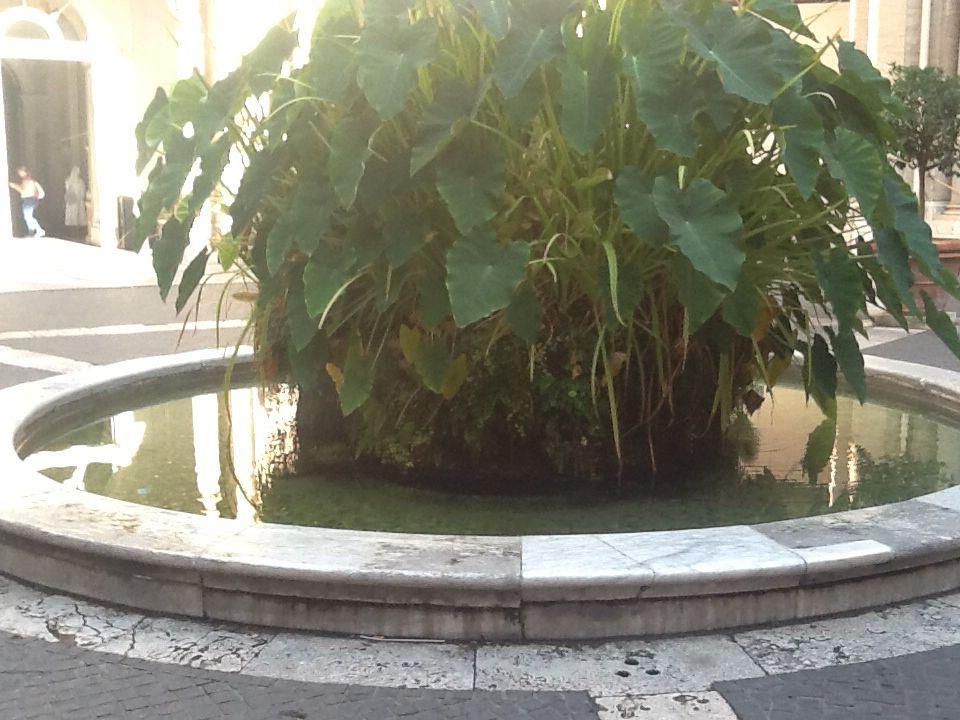 Jardín del Vaticano