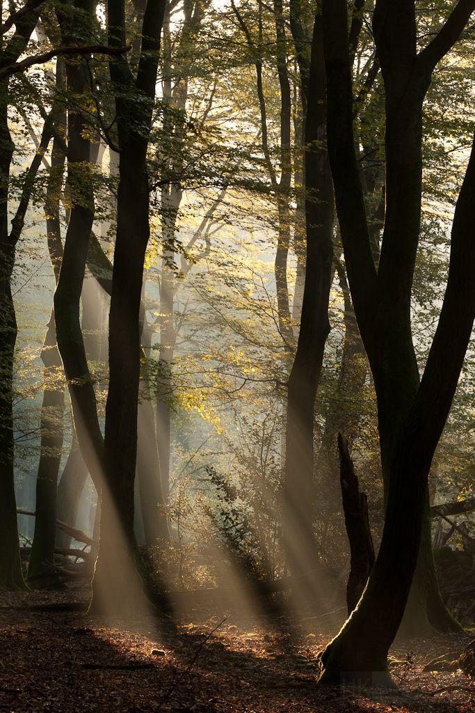 Bordjack - digitalexrth:     Mystical light byHans Koster