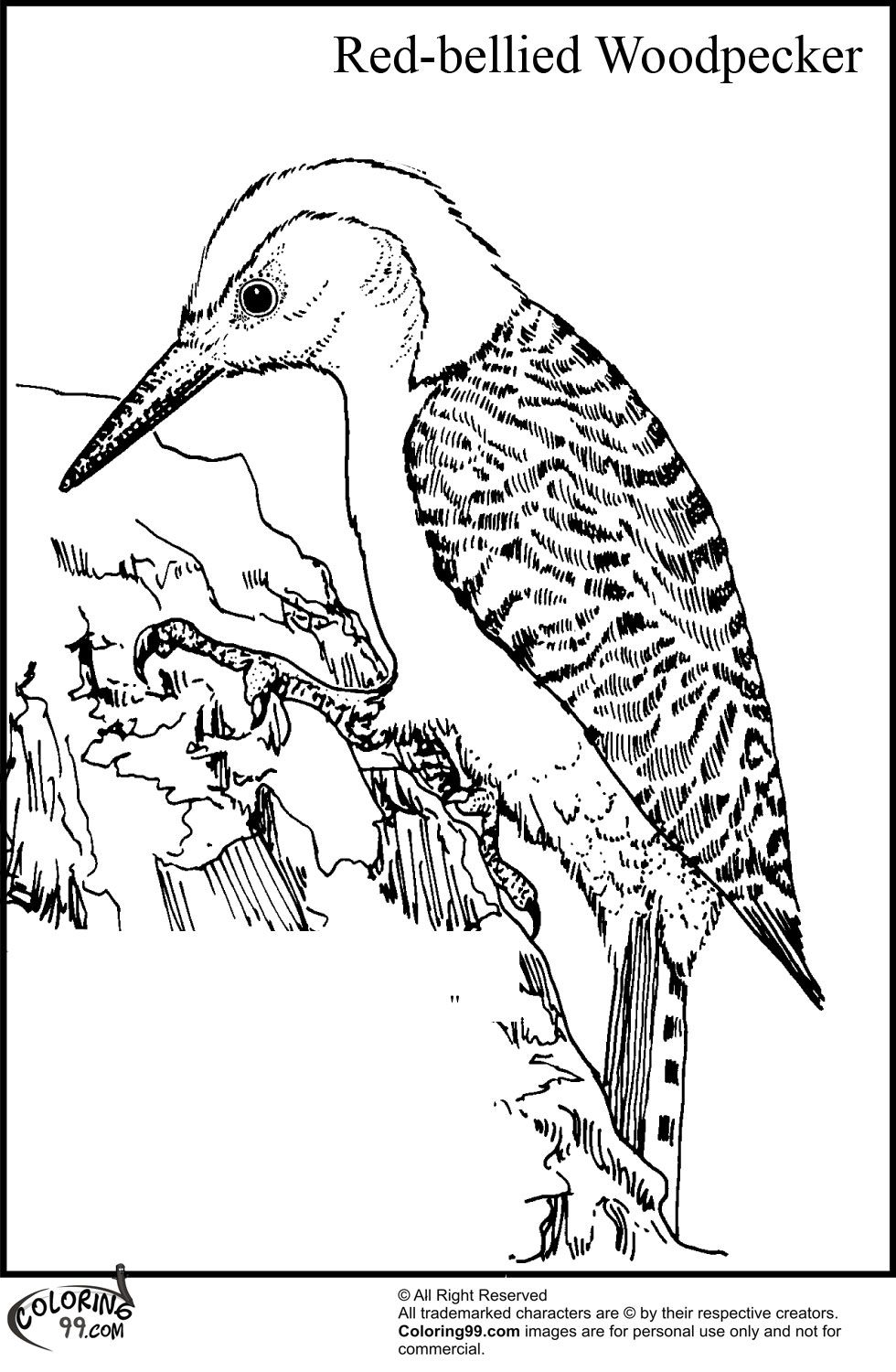 Red Bellied Woodpecker Coloring Pages Bird Coloring Pages