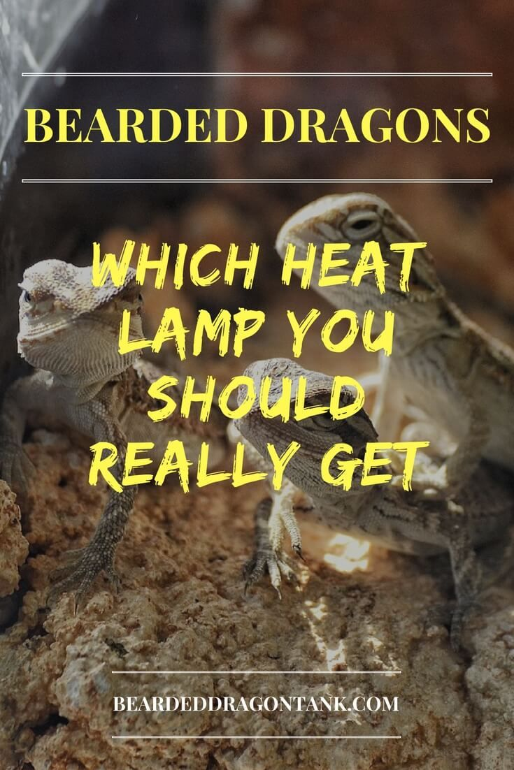 Which Bearded Dragon Heat Lamp You Should Really Get Reptile Bearded Dragon Heat Lamp