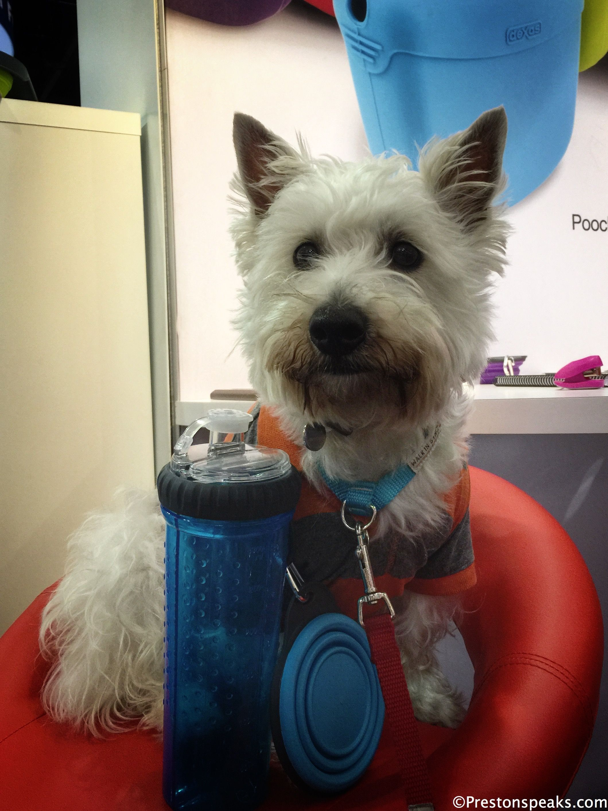 Congrats To Dexas On Winning The Best Dog Product At
