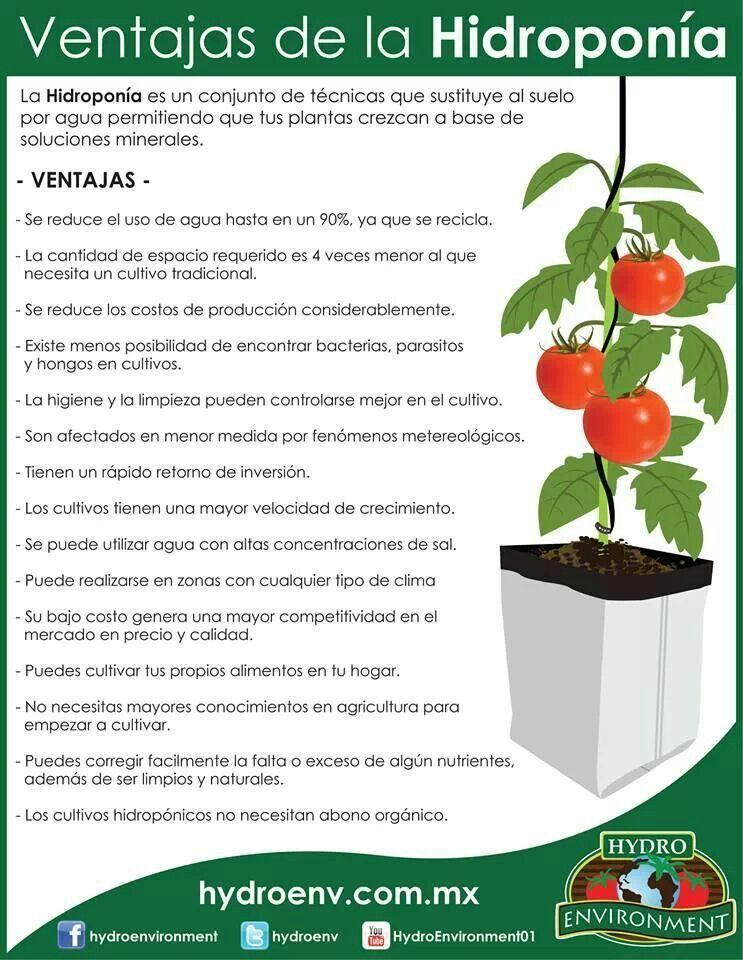 Hidroponia Hidroponia Hidroponia Casera Germinacion De Semillas