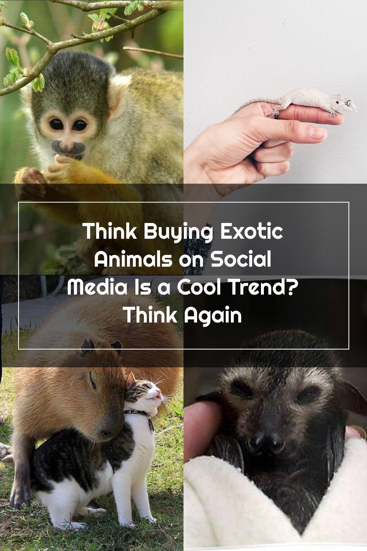Pin Na Doshci Exotic Pets