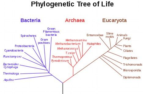 The Grandfather Of Life On Earth Common Ancestor More Sophisticated Than We Thought Say Biologists Phylogenetic Tree Tree Of Life Life Map