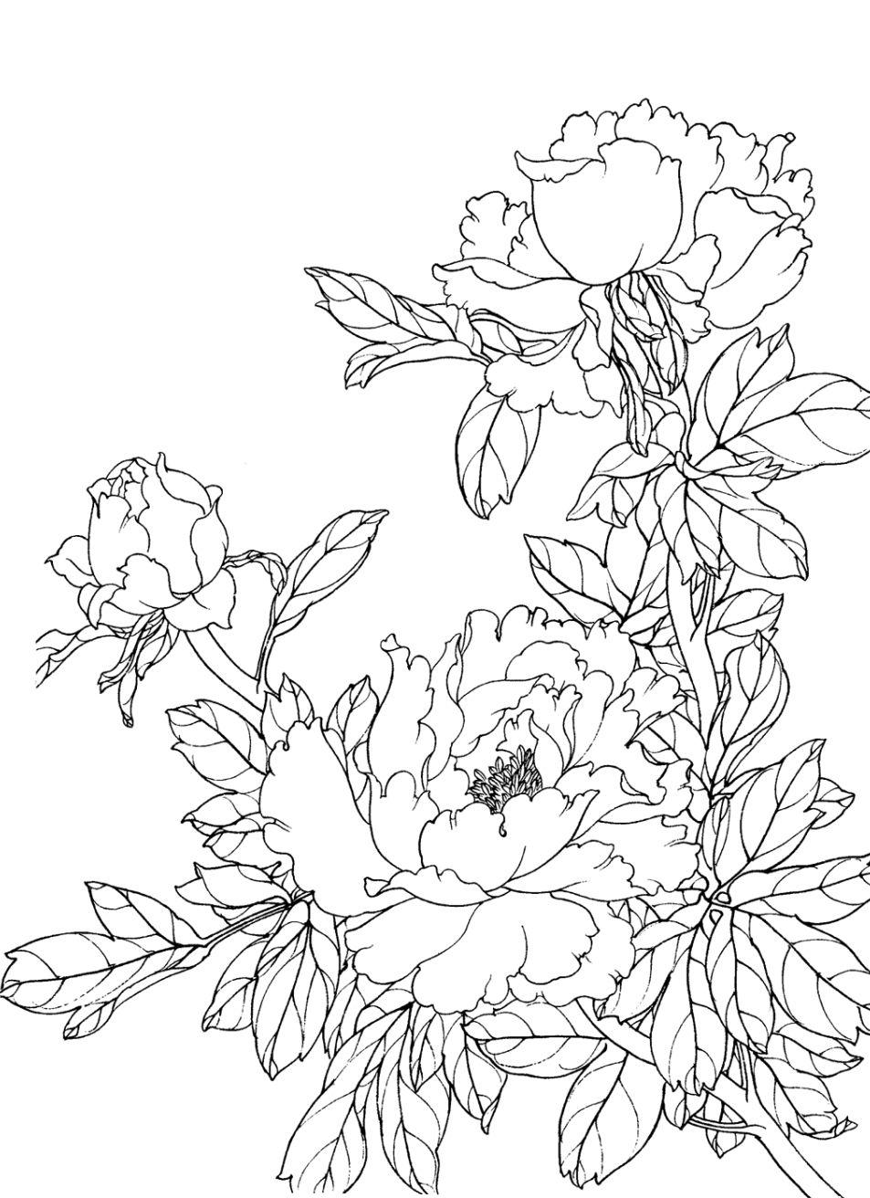 Peonies Pattern Flower Line Drawings Flower Drawing Flower Drawing Tumblr