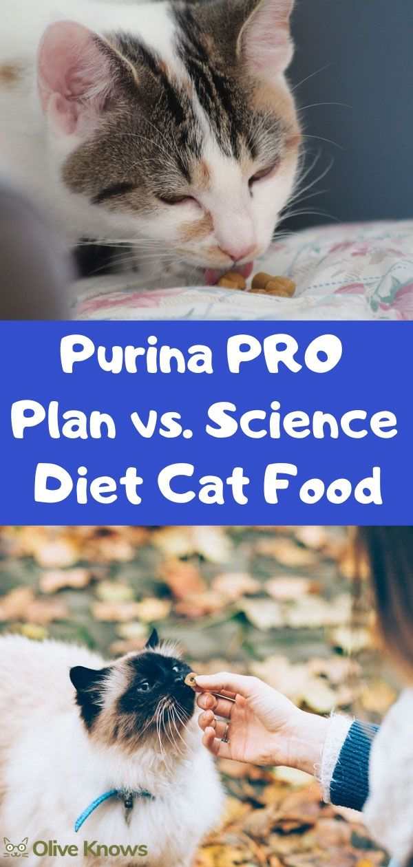 Purina PRO Plan vs Science Diet Cat Food [2020 Edition
