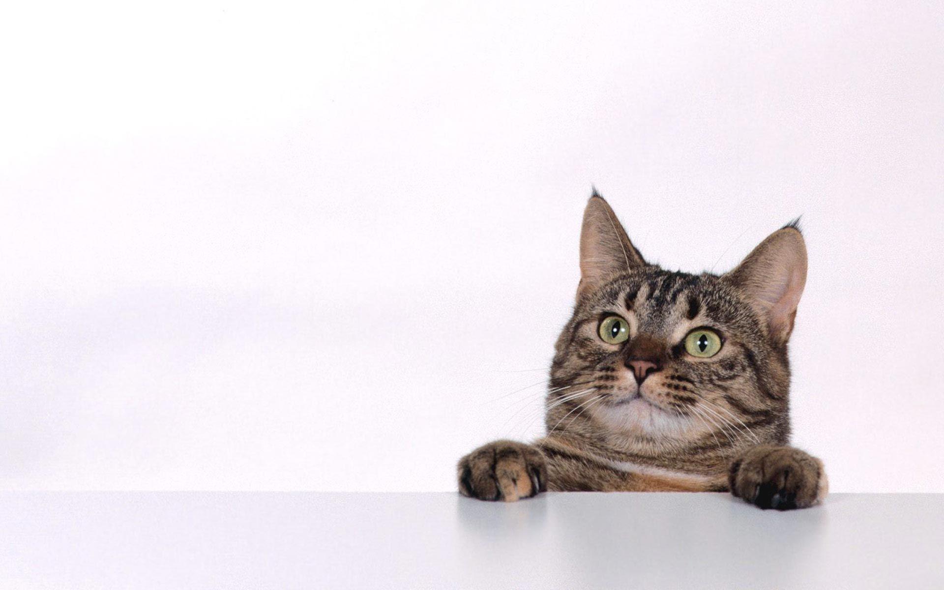 猫の壁紙でデスクトップに癒しと安らぎを 猫の壁紙 猫画像22選