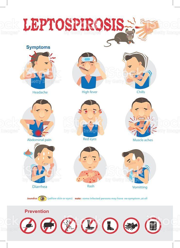 Leptospirosis symptoms