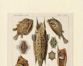 Antike Fish Druck (1901) - Original-Lithographie - Sea Life Haeckel Print - seltene Ocean Art Print - Luxus Dekor Wandkunst