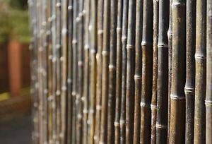 Sichtschutz-aus-Starken-Braunen-Bambusrohren-1-8m-x-1-9m-Bambusmatte-Garten-Zaun #bambussichtschutz Sichtschutz-aus-Starken-Braunen-Bambusrohren-1-8m-x-1-9m-Bambusmatte-Garten-Zaun #bambussichtschutz