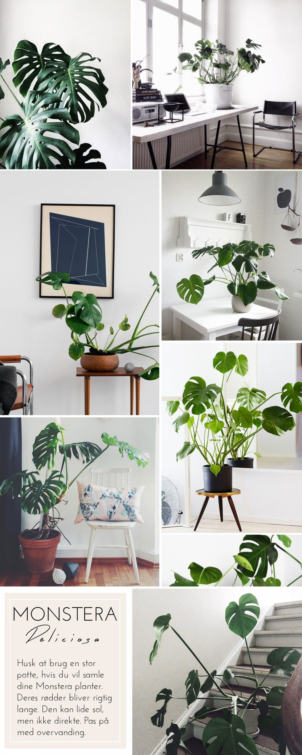Where And How To Style Plants Around The House