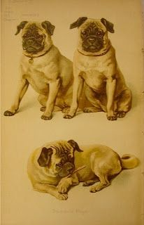 Pug History And Vintage Photographs Pugs Pug Photos Pug Lover