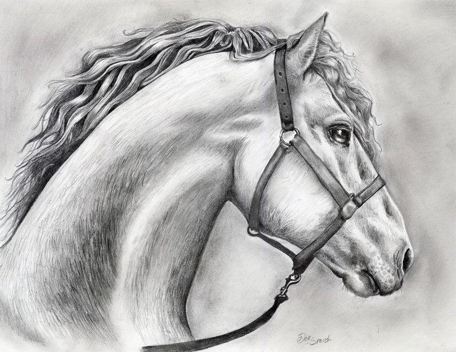 Horse drawing in pencil by deedeedee123 on deviantart