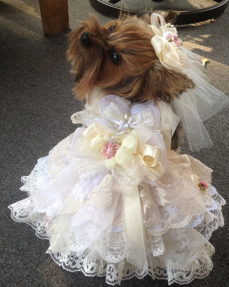 SHABBY IVORY LACE S DOG WEDDING DRESS W VEIL RING PILLOW HARNESS Pink