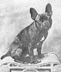 toybulldogs2.jpg 208×243 pikseli