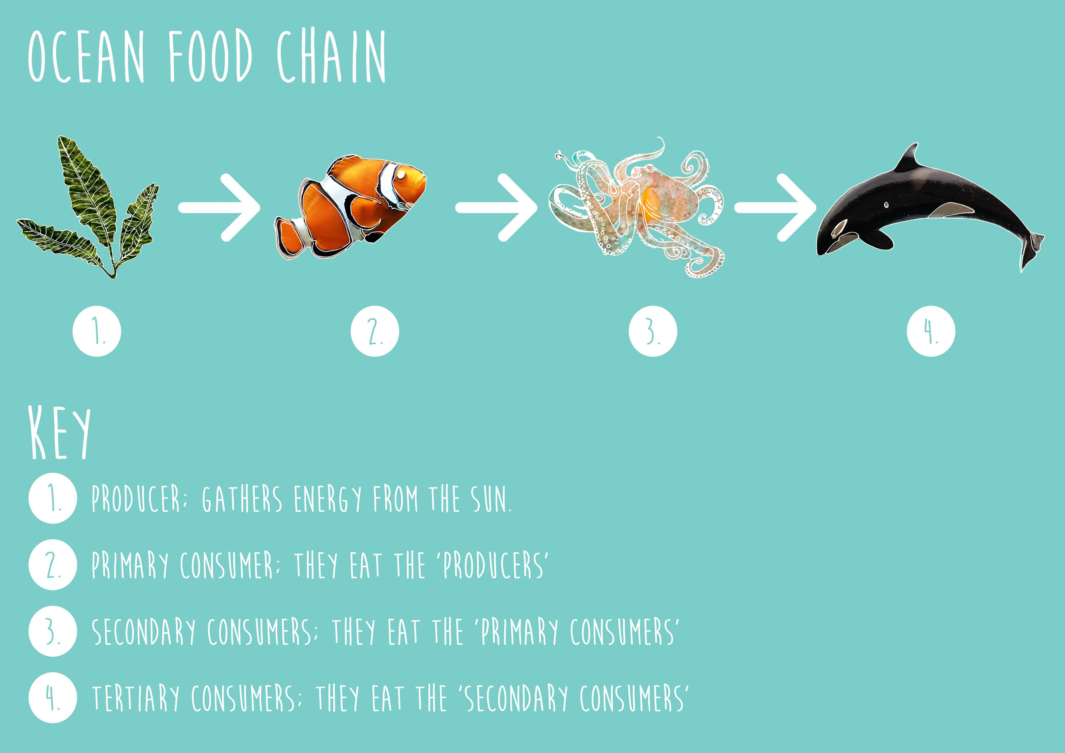 Tundra Food Web - Top Hd Images For Free