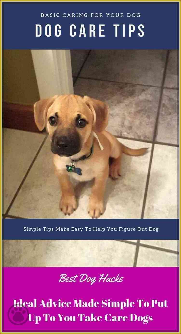 If You Have A Dog Don T Miss This Dog Hacks Dog Hacks Dog Care