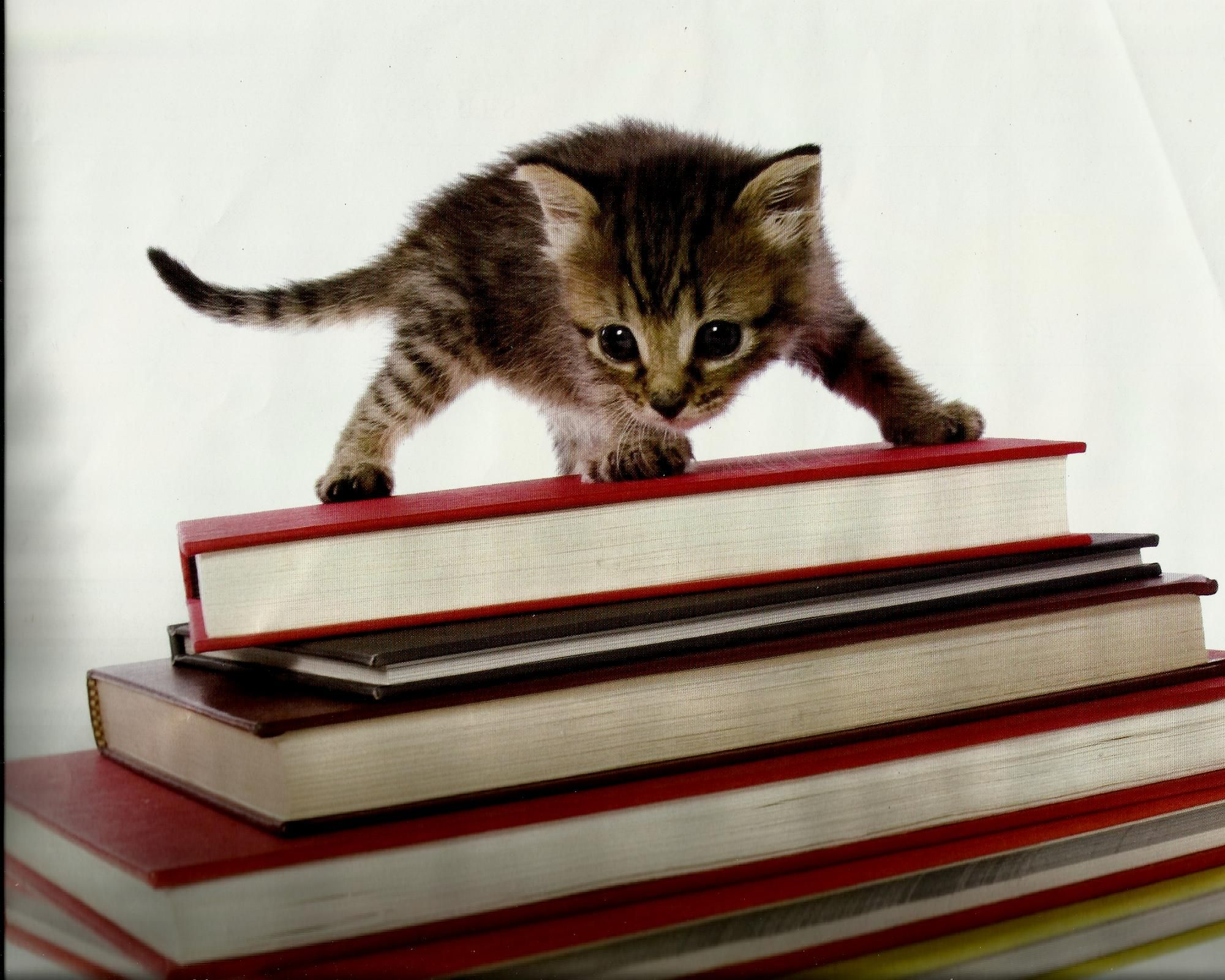 Riese Autostraddle Kittens And Puppies Kittens Cutest Cute Animals
