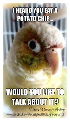Pet Bird Stuff Yup Lol Bird Quotes Budgies Bird Funny Parrots