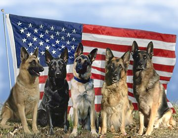 Memorial Day Tribute Military Dogs Military Working Dogs