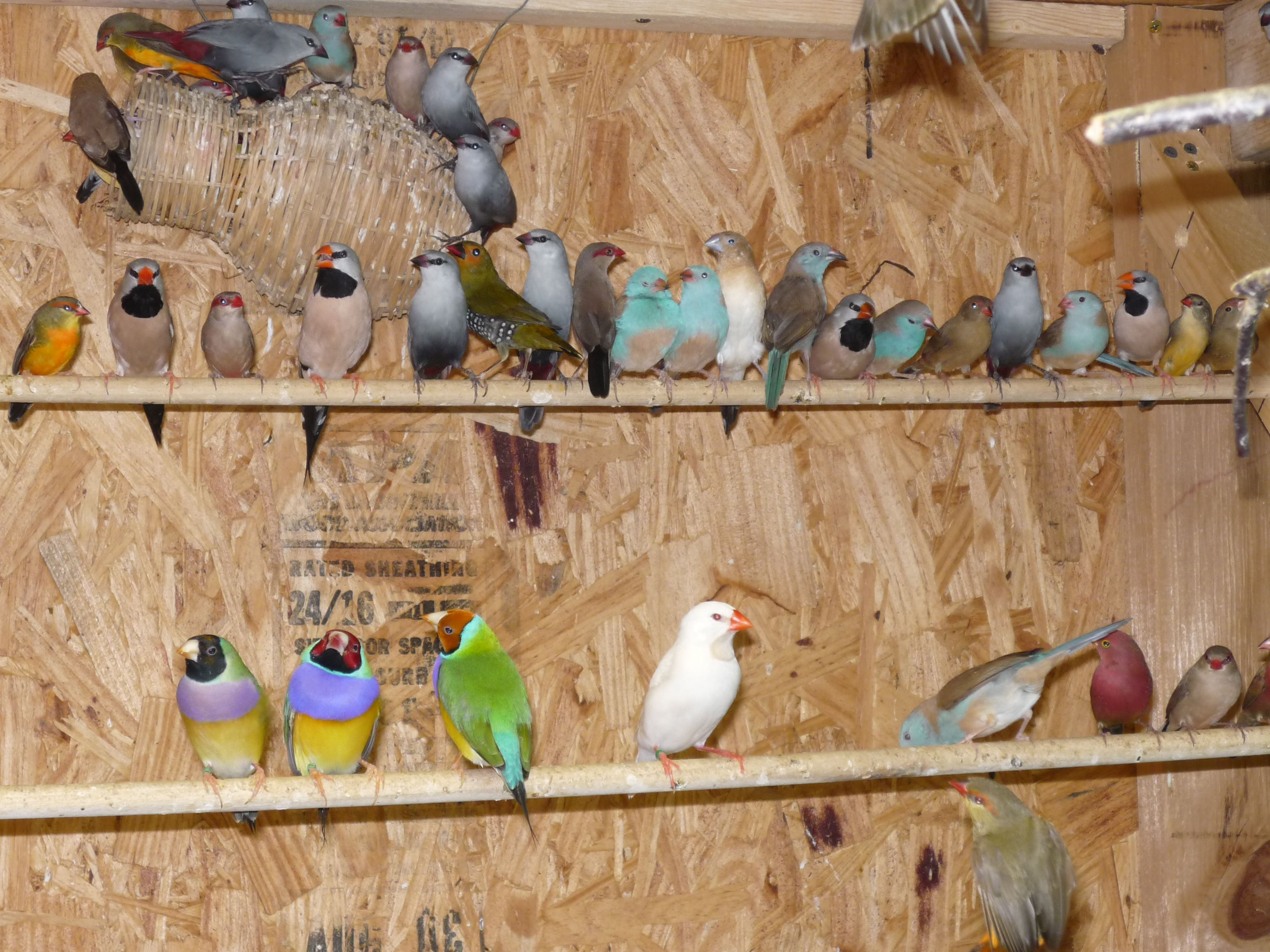 http://sacexoticfinch.com/wp-content/uploads/2011/11/bird-room-014.jpg
