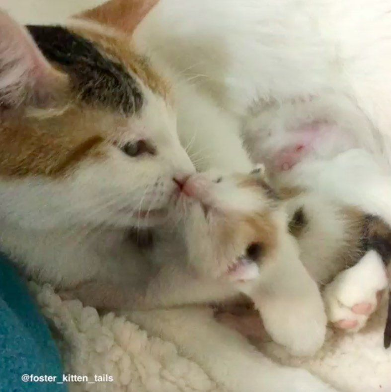 Cat Mama And Her Only Kitten Saved From Shelter She Can T Stop