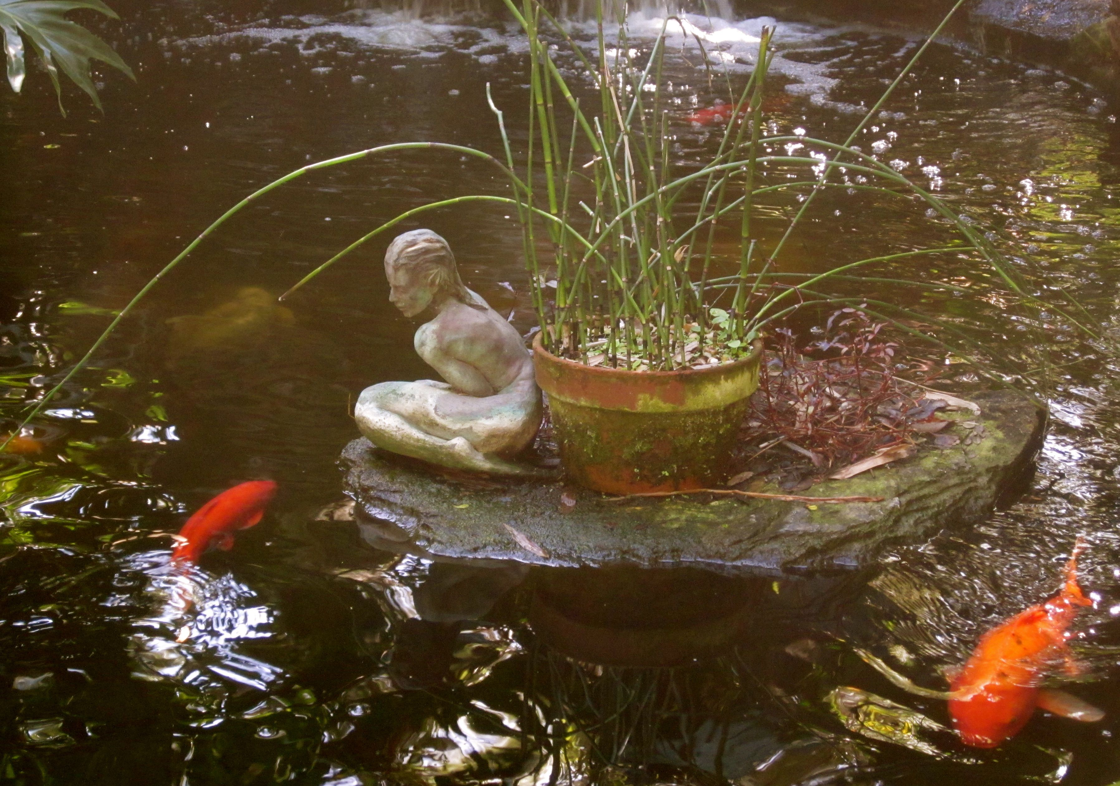 Koi pond at Marie Selby Gardens © 2013 Susan Ashley Michael ...