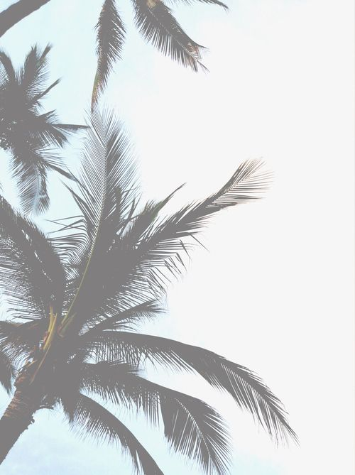 Tumblr Summer Vintage Indie Transparent Background Overlay Feellng