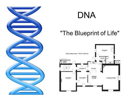 Dna the blueprint of life rosalind franklin 1952 rosalind franklin dna the blueprint of life rosalind franklin 1952 rosalind franklin used x ray malvernweather Gallery