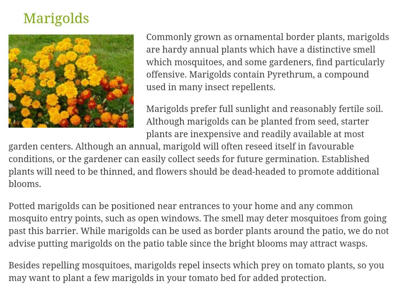 5 Easy To Grow Mosquito Repelling Plants Mosquito Repelling