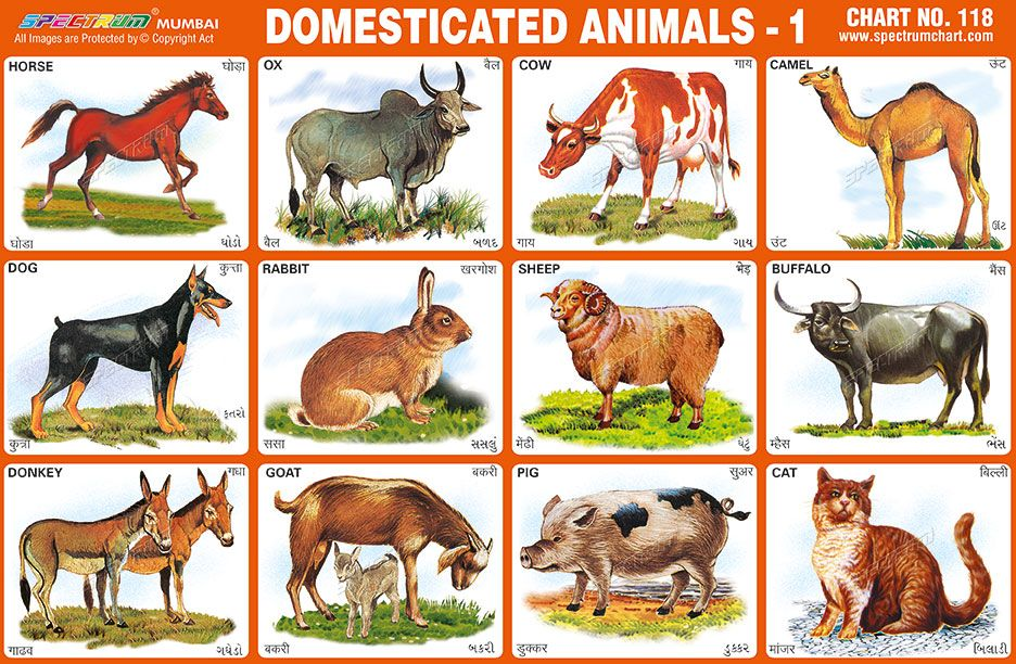 Spectrum Educational Charts: Chart 118 - Domesticated Animals 1