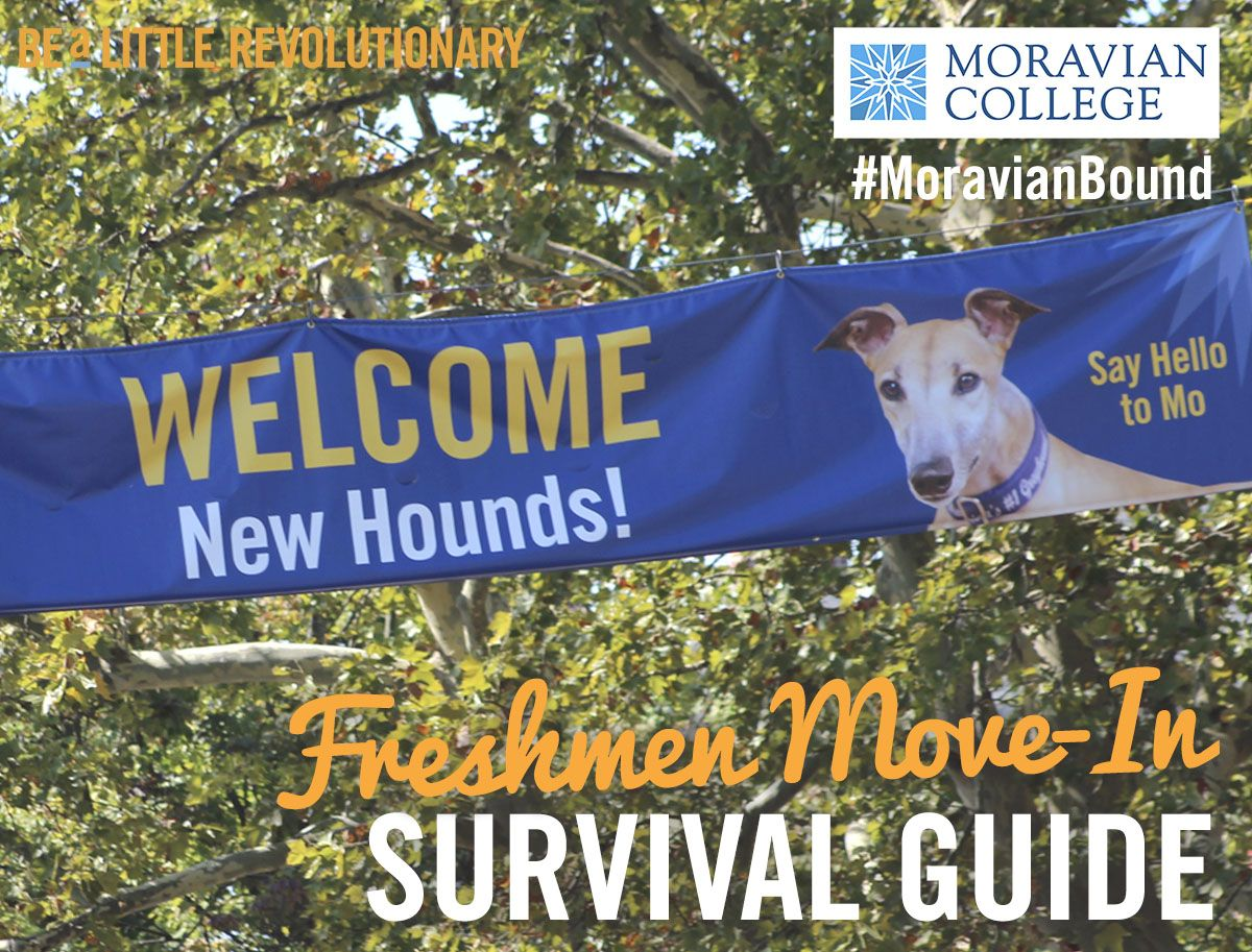 college survival guide freshman year move in freshman year college survival guide freshman year move in
