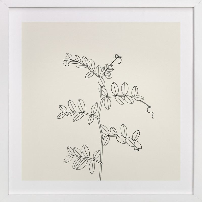 """""""Wild Pea"""" - Available in a variety of frame and size options"""